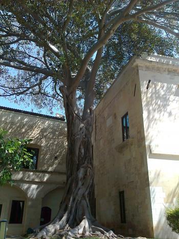 ex Conservatorio Sant'Anna
