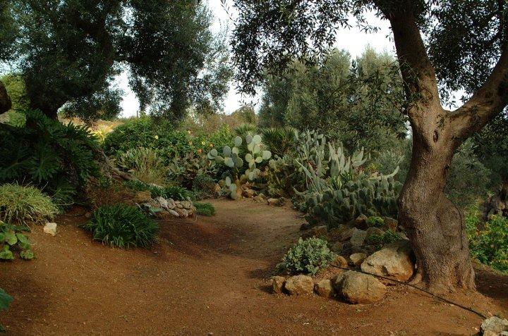 Giardino botanico lama degli ulivi monopoli il tacco - Giardino con ulivi ...