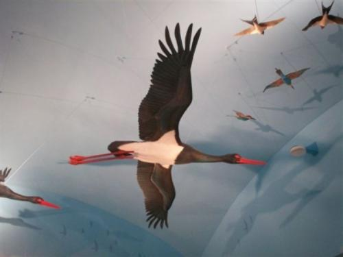 Museo Della Migrazione e Osservatorio Ornitologico