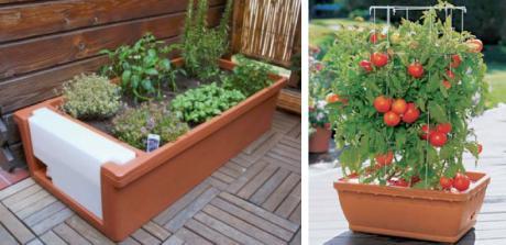 L\'orto sul balcone: alcuni suggerimenti da Dichio vivai garden - il ...