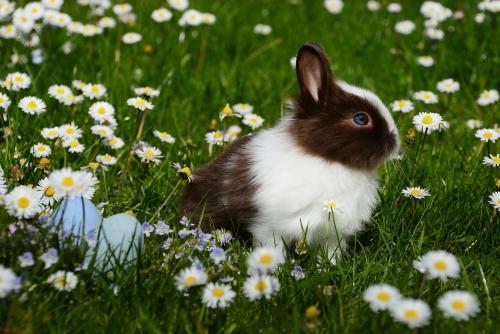 Come aprire un allevamento di conigli
