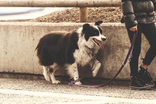 Come portare a spasso il cane: consigli e regole da rispettare