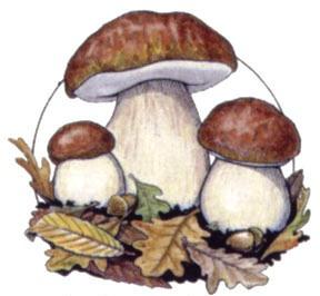 """Benvenuto Autunno, il menu di domenica 4 ottobre 2015 """"Funghi di Bosco"""""""