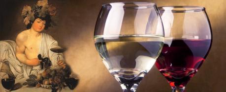 Suggestiva Degustazione nel Museo del Vino