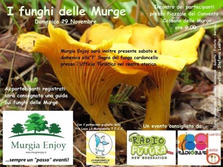 I funghi delle Murge