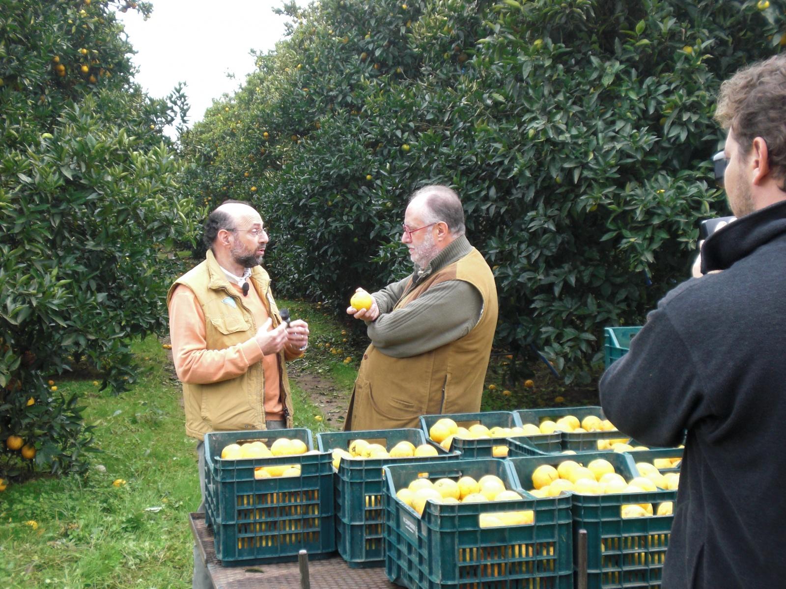 Gli agrumi di palagiano in televisione su canale 5 for Calendario concimazione agrumi
