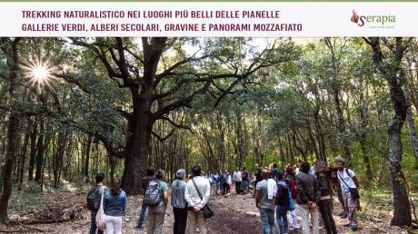 L'incantevole Bosco delle Pianelle