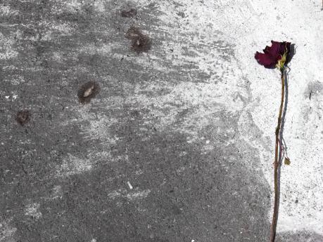 Ezia Mitolo | La vita difficile dei fiori.