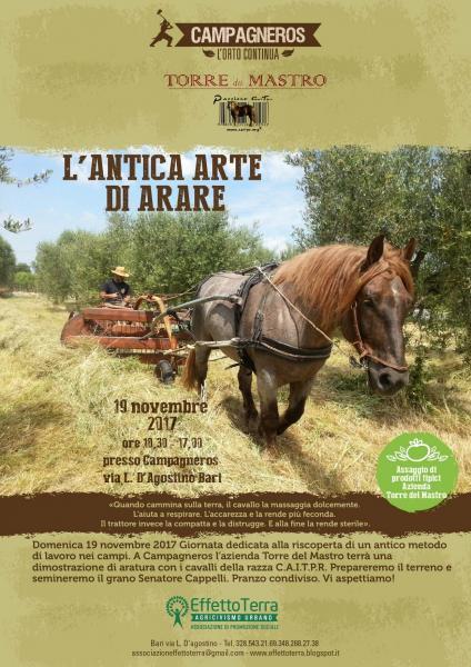 Semina del grano antico e aratura con cavallo