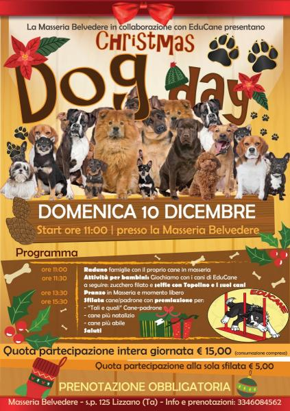 Christmas Dog Day