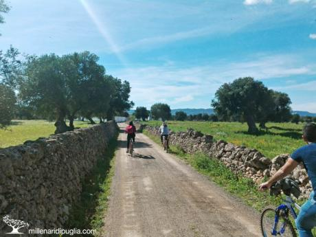 In bici tra la costa e gli ulivi secolari di Ostuni