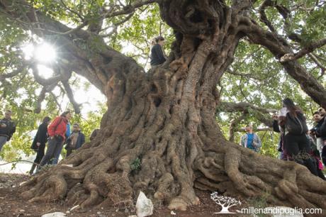 Escursione tra ulivi e carrubi monumentali da Masseria Scategna
