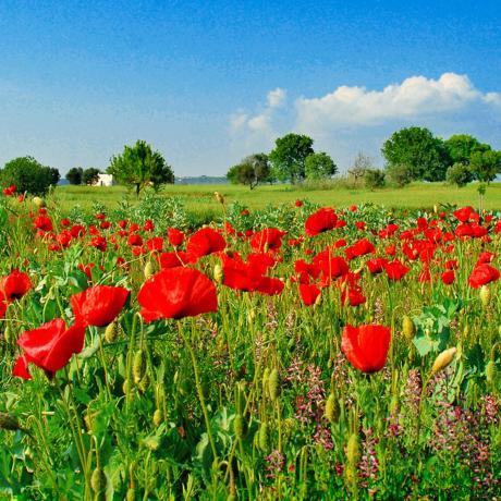 Tutti i colori della Primavera da Duca Carlo Guarini per Cantine Aperte