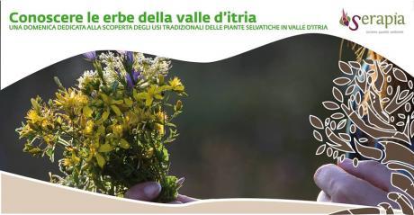 Conoscere le erbe della Valle d'Itria