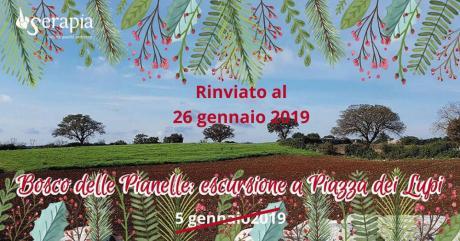Bosco delle Pianelle: escursione a Piazza dei Lupi