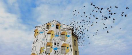 Incontro con Millo, street artist mesagnese