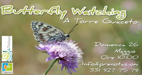 """Butterfly Watching - A """"caccia"""" di farfalle a Torre Guaceto"""