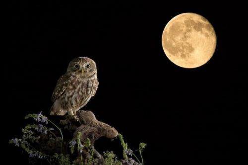 Camminando sotto la luna piena