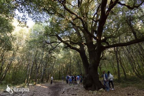 Il segreto del bosco