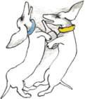 Mostra su Toti Scialoja a cura di Antonello Tolve