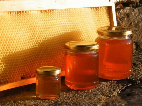 Yoga nel bosco, le api e il miele