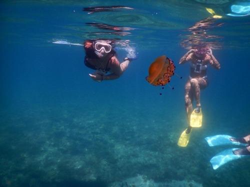 Snorkeling: i tesori sommersi di Leuca