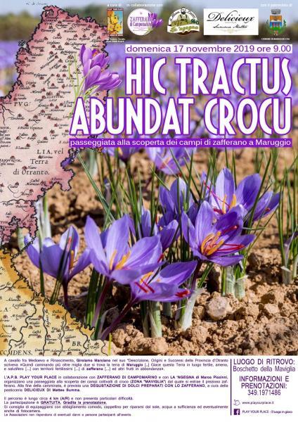 Hic tractus abundat crocu. Passeggiata alla scoperta dei campi fioriti di zafferano