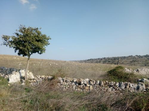 Tra iazzi e masserie, sui passi dei pastori e i suoni della zampogna