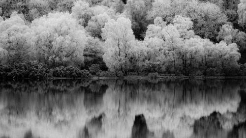 Il giardino dei ciliegi di Anton Čechov
