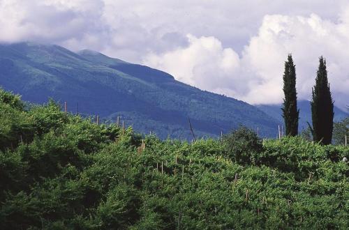 Serata degustazione vini Cantine Umberto Bortolotti